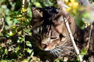 cat20150712
