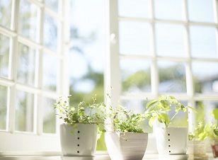 kitchen-herb