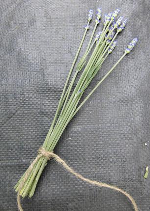 lavender2013-2